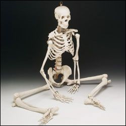 mexicanjumpingskeleton