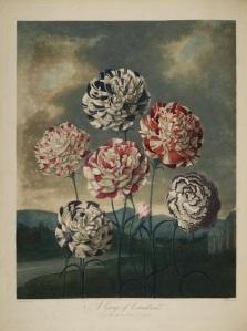 Thornton Flora 1
