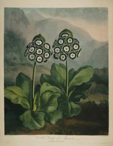 Thornton Flora 3