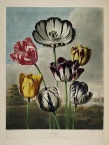Thornton Flora 4