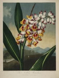 Thornton Flora 6