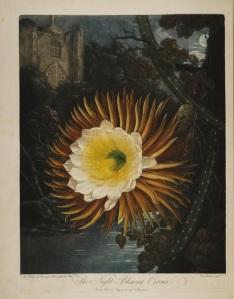 Thornton Flora 7