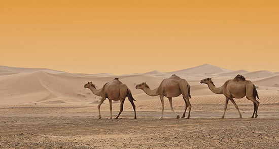Dubai-history-heritage-sheik-zayed-road-(3)