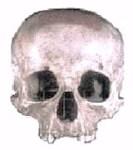 mozartskull orig2